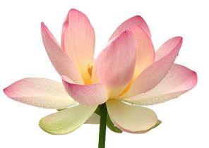 yoga-lotus_16f9