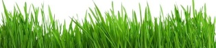 wheatgrass_barley_grass_article_header