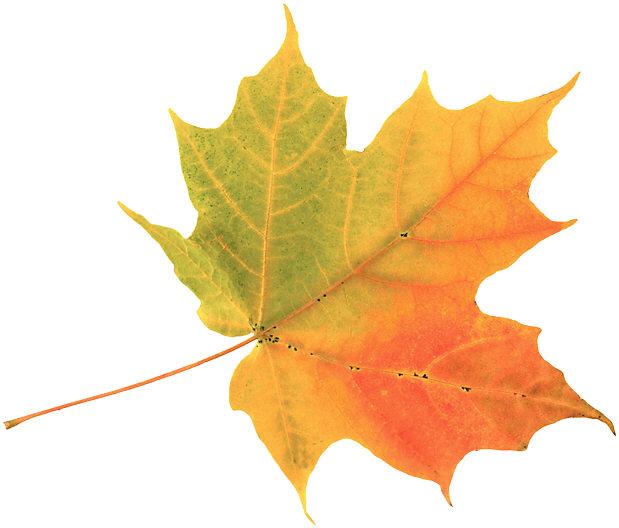 f2c8f-leaf-fall